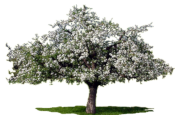 Logo Les Neuf Cerisiers
